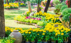 Summertime Blooms for Caregivers